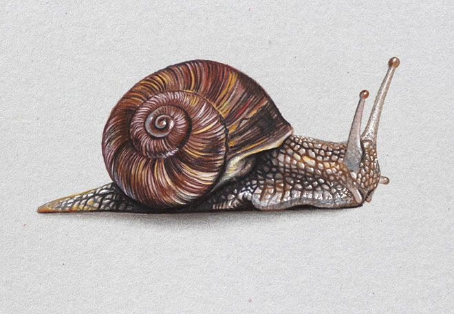 Realistic Colored Pencil Drawings | 25 Realistic Color Pencil Drawings with Video Tutorials by Marcello ...