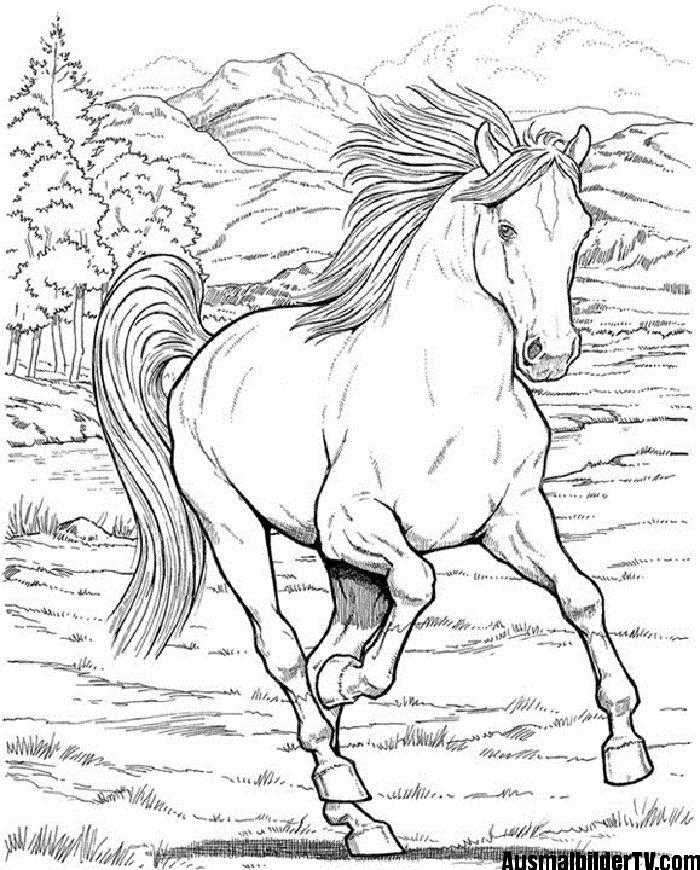 schöne ausmalbilder pferde  ausmalbilder pferde