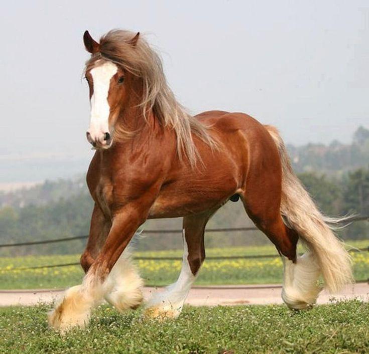 .gorgeous chestnut horse with white blaze and white socks