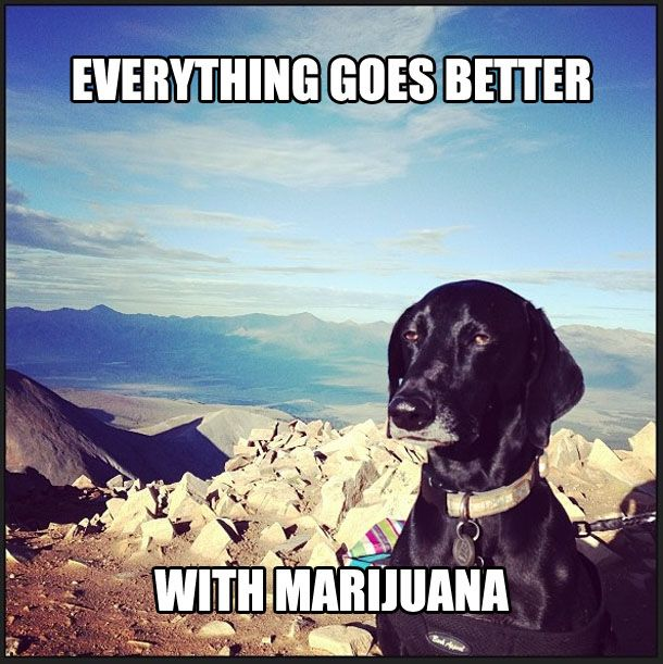"""Some went the stoner route… 