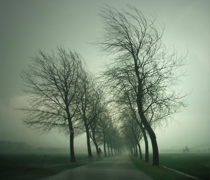 buigende bomen
