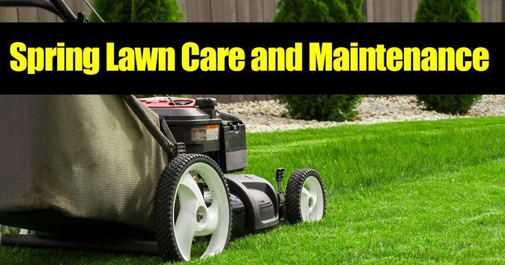 early spring lawn care tips - 735×386