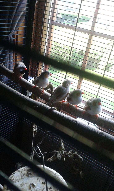 fuglene mine