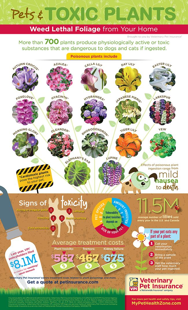 Toxic Plants Infographic Protect Your Pets from Dangerous Foliage  http://www.petinsurance.com/healthzone/pet-articles/pet-health-toxins/Pets-and-Toxic-Plants-Infographic.aspx