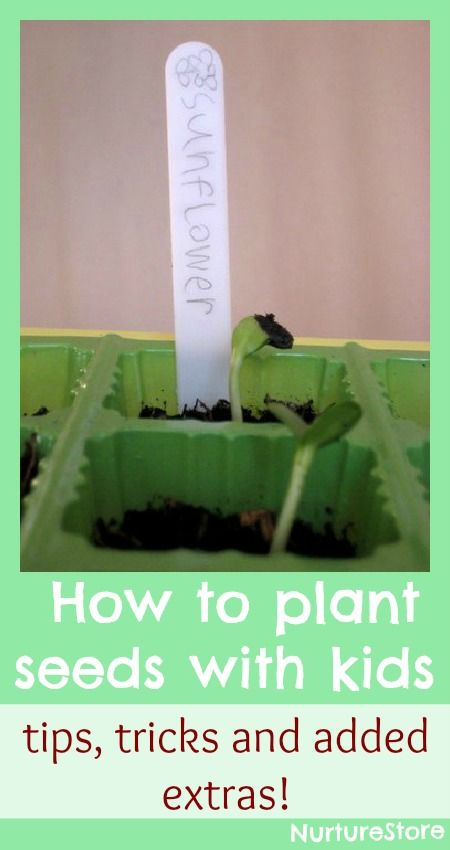How to plant seeds with kids- all the info one could possibly need!