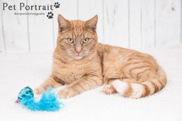 Kattenfotografie Oude Wetering - Fotoshoot voor twee katten-2