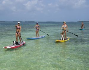 Lazy Dog : Key West Kayak and Paddleboard Tours, Rentals and More… » Paddleboard