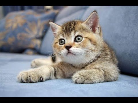 ВСЕ ПРО КОШЕК: Что нужно для котенка