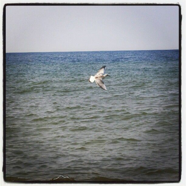 Photo by aridka • Instagram - Mewa