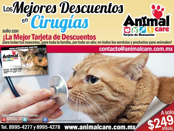 En CIRUGIAS al presentar tu TARJETA DE DESCUENTOS ANIMAL CARE obtienes descuentos desde un 10% hasta un 50%.  Llámanos al 8995-4277 y 8995-4278 o escríbenos a contacto@animalcare.com.mx