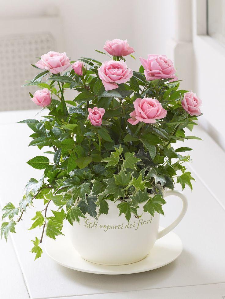 Tea Cup Garden Needs A Super Mini Rose Or A Really Big