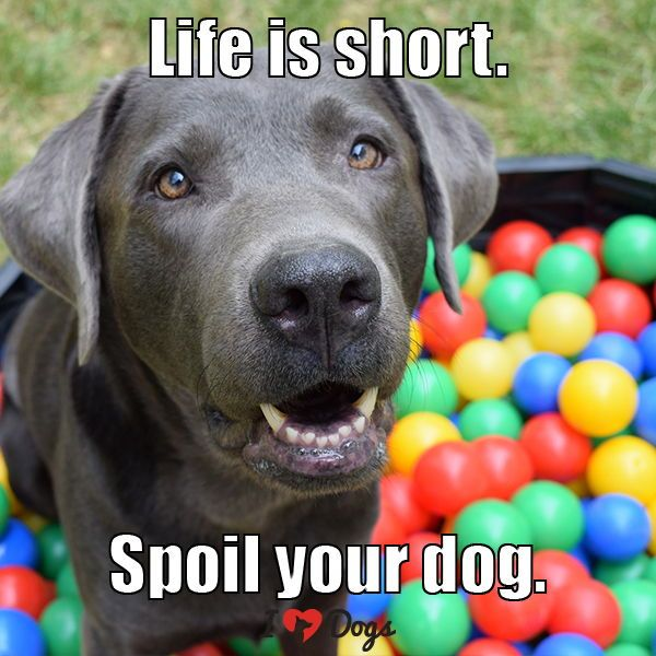 Life Is Short Spoil Your Dog Dog Quotes Love Baby Dogs Cute