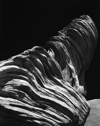 Edward Weston, Driftwood