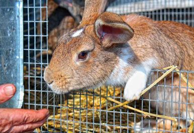 212 Best Rabbits Images On Pinterest Rabbit Hutches