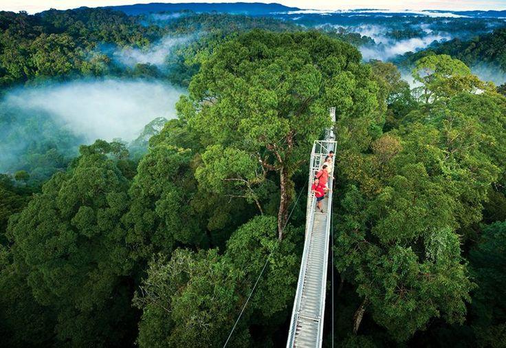 Rezerwat Monteverde, Kostaryka / Монте-Верде, Коста-Рика  Zapraszamy: http://www.nevadatravel.pl/?ep3[]=%3Fsid%3D4gvpcf5po81djv7bgapb641g21c0n0d4%26lang%3Dpl%26sd%3D06.01.2016%26ed%3D29.01.2016%26s%3D4%26tt%3DF%26sp%3D3%26st%3DPA&ep3[]=ds%3D416%253A
