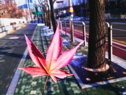#낙엽 #가을 #단풍