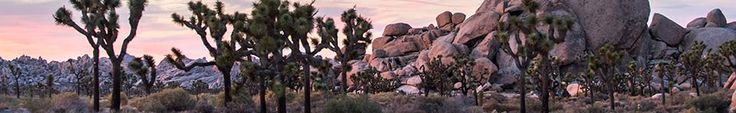 Hiking - Joshua Tree National Park (U.S. National Park Service)