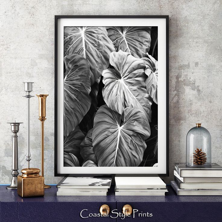 5.00$ - Elephants Ear Leaves Print, Black and White Photography, Tropical Print, Print, Botanical Print, Wall Art, Posters, Prints, Photography,125b