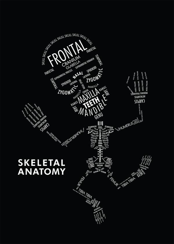 SKELETAL ANATOMY by Amy Kwan    An informational poster displaying the hierarchy and organizational relationships with typography. In this case, type serves as both image and information on the skeletal anatomy.
