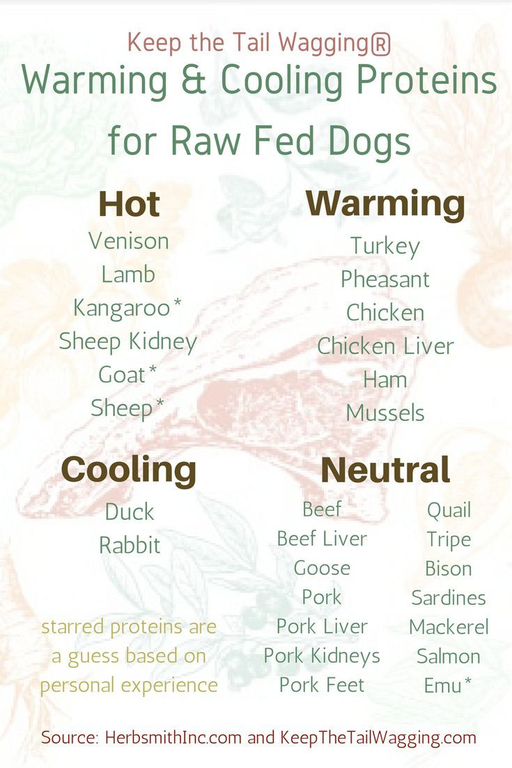Warming And Cooling Raw Feeding For Dogs Raw Dog Food Recipes