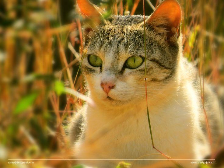 #Cat in haunting mood