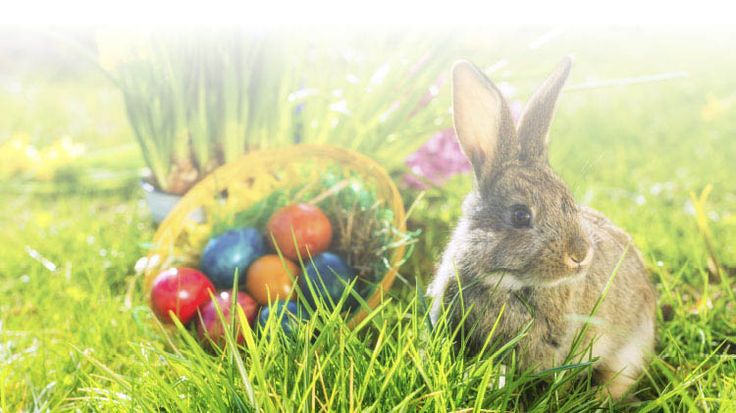 Fort Campbell MWR to hold Easter Eggstravaganza Egg Hunt on Saturday, March 31st