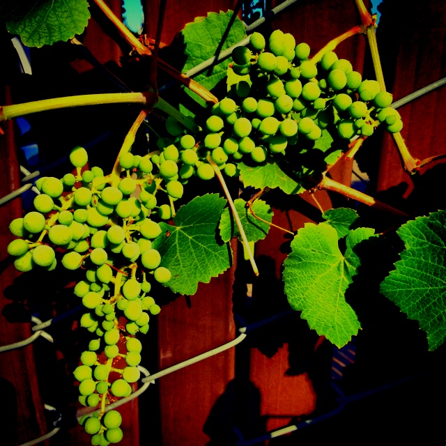 Gas station grapesGas Stations, Stations Grape
