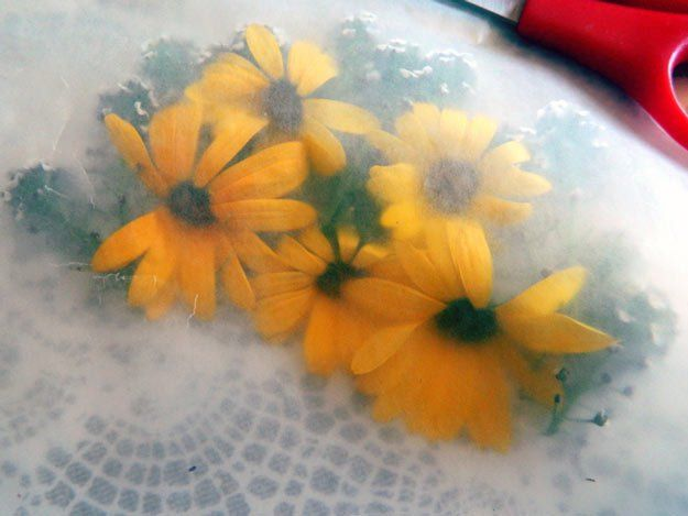 How To Perfectly Press Flowers | Easy Steps On How To Preserve your Favorite Flowers.