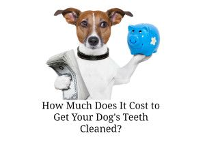 How Much Does It Cost To Get A Dogs Teeth Cleaned