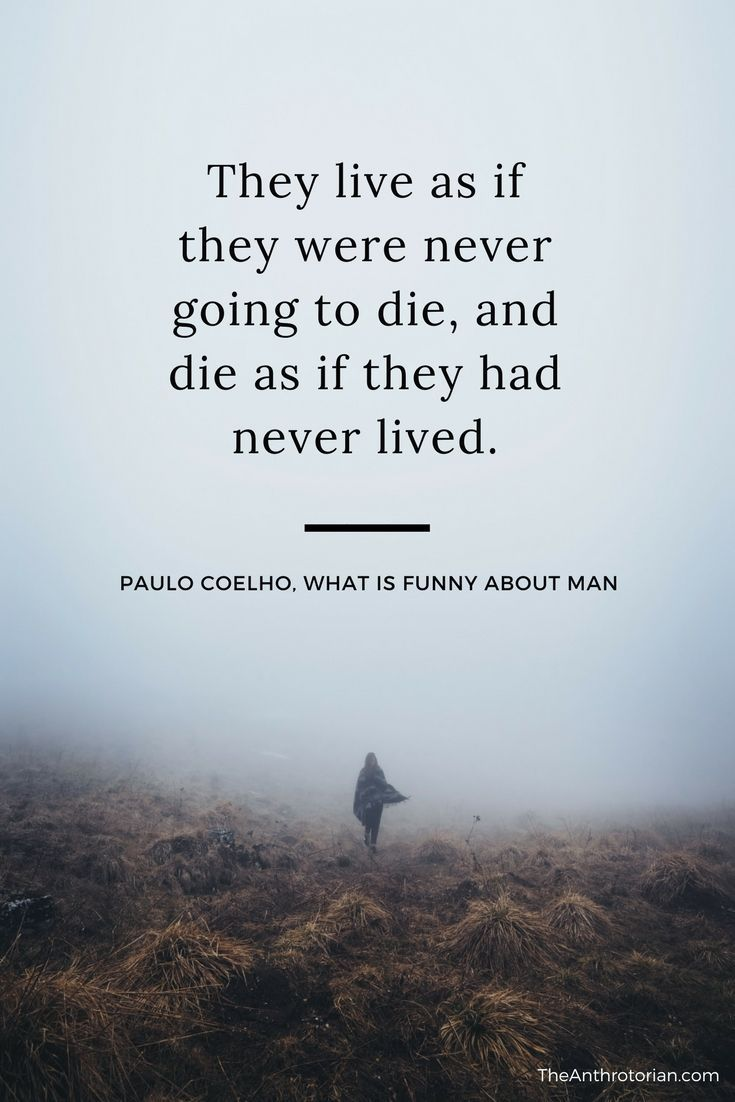 12 stand out quotes from paulo coelhos amazing book the - 735×1102