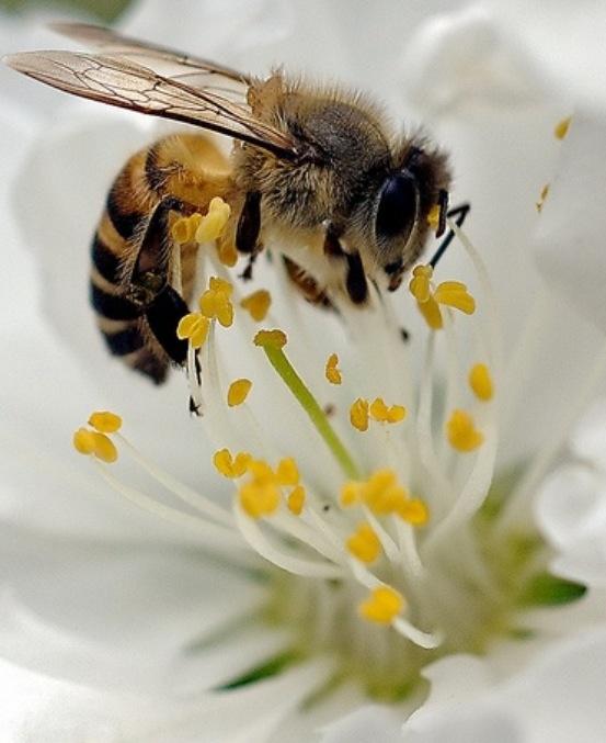 Bees a buzzin