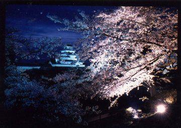 鶴ヶ城 夜桜 tsuruga castle, Fukushima, Japan