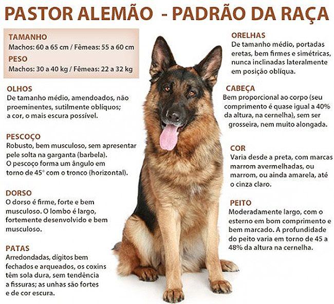 pastor alemão
