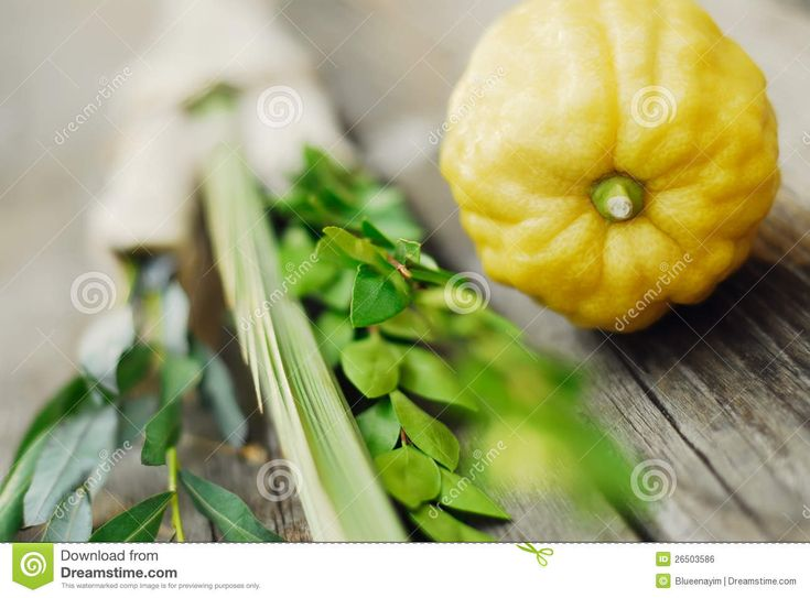 Lulav And Etrog Royalty Free Stock Image - Image: 26503586