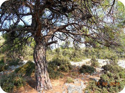 Natural, ca Aloe Vera: Jurnal de Thassos - 15 August 2015. Pin in Thassos