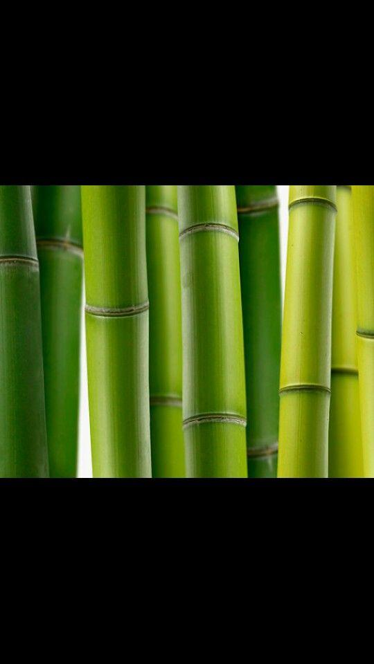 bamboe: eeuwige jeugd, geluk succes deugdzaamheid