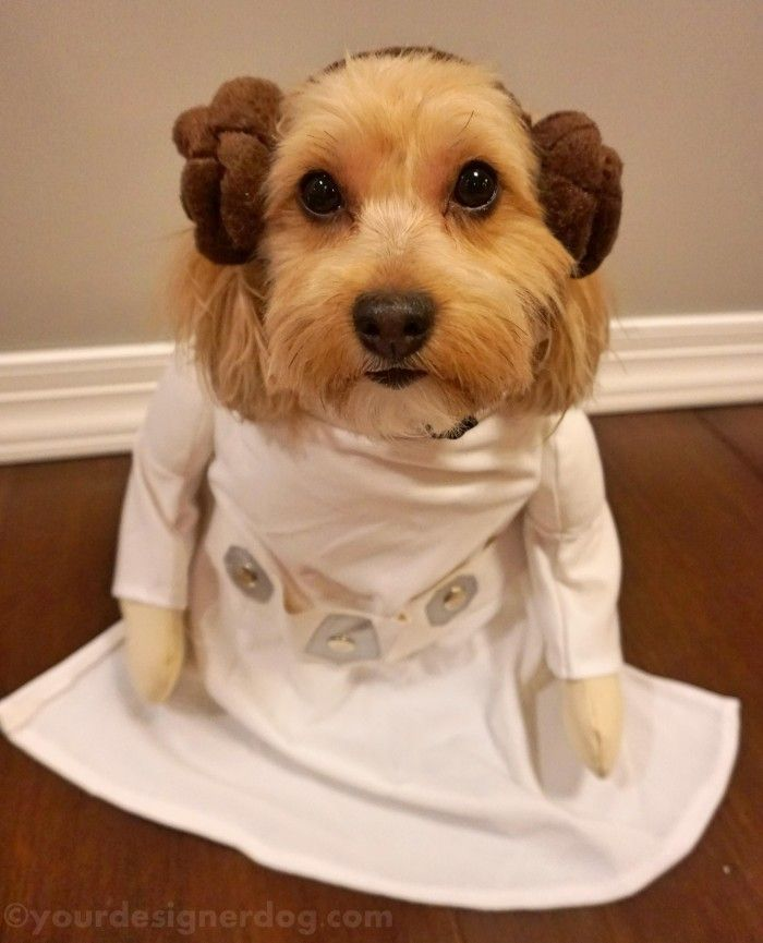 princess leia halloween costumes for dogs yourdesignerdog - Halloween Costumes For Labradors