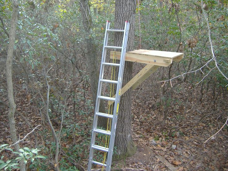17 best images about tree house on pinterest trees for Treeless treehouse
