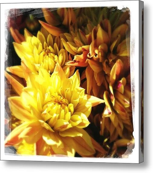 Contemporary Floral Photography by Napa Artist Penelope Moore. Custom photograph printed on canvas with gallery wrap sides made to order!