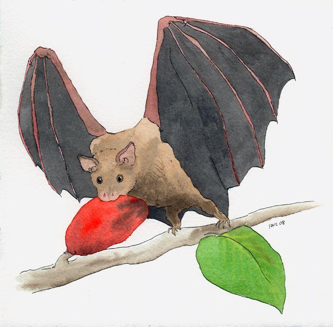 Drawings Of Fruit Bats Fruit Bat Bat Drawings