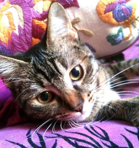Il gatto è imprevedibile e ammaliante come un'orchidea selvaggia.  (Stanislao Nievo) pinned with Pinvolve