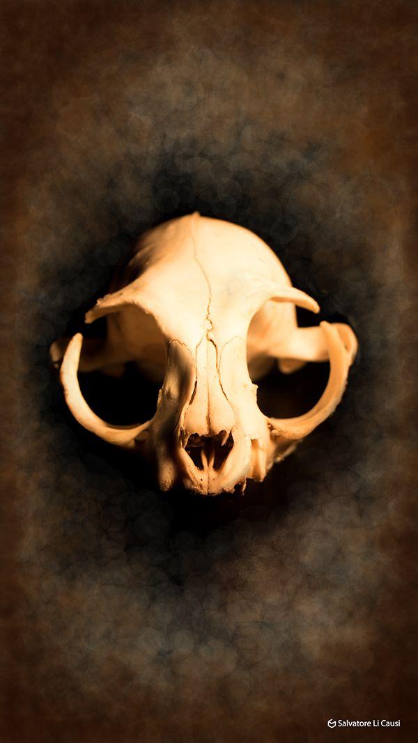 Skull Cat