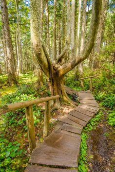 amazing hiking trail! Cape Flattery Trail, Neah Bay, WA