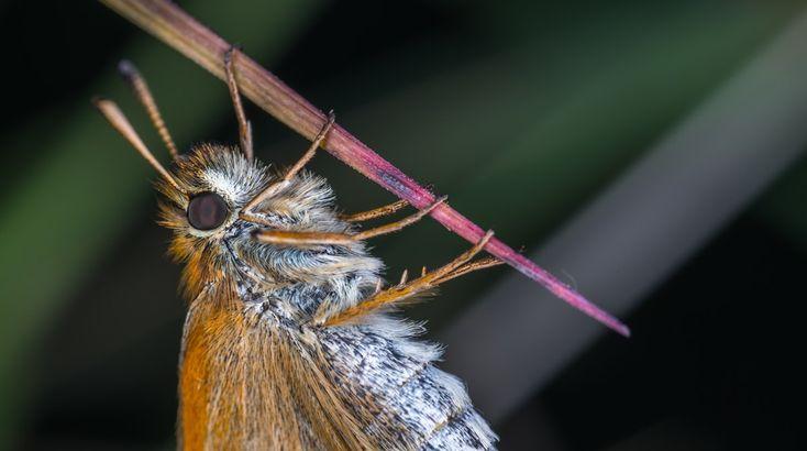 Macro Photography Of Brown Moth  Free Stock Photo