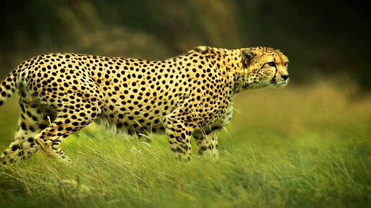 Find Professional Photographers in Agra for Wildlife Photography