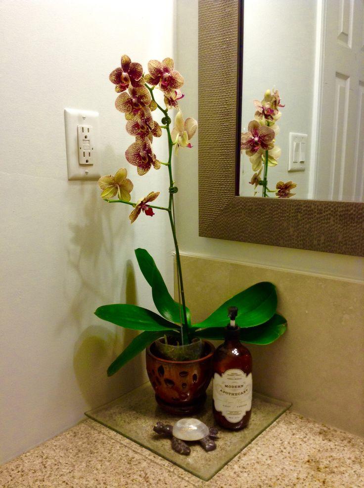Phalaenopsis Elegant Karin Aloha - Orchid in the bath room