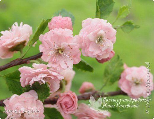 Цветок луизеании «  Керамическая флористика. Цветы из холодного фарфора. Уроки и мастер-классы