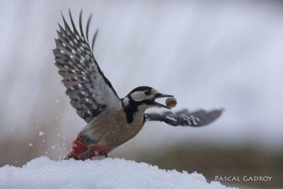 Galerie Oiseaux d'hiver