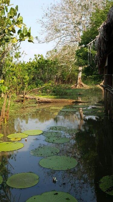 Amazonas - Colombia Agosto / 2015 Una experiencia inolvidable... hay qie vivirla para entenderla.