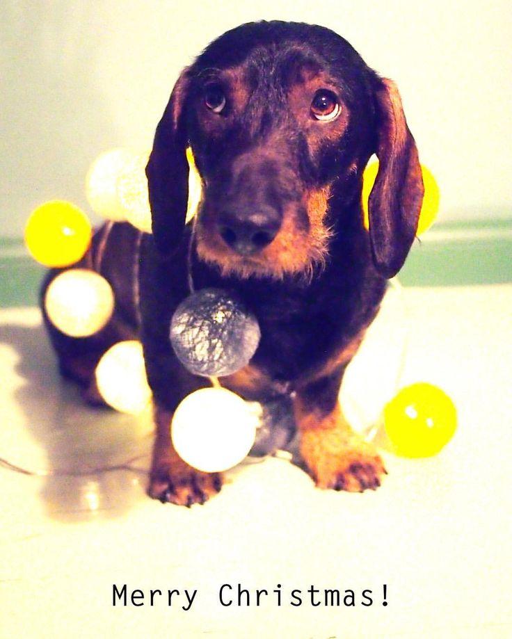 Dog inspired Christmas card with a dachshund twist.